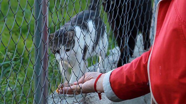 Gatos vadios de Madrid nas mãos de voluntários