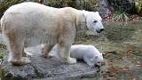 Ecco Quintana, cucciolo d'orso polare nato in Baviera