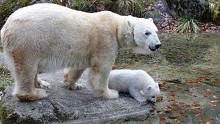 В зоопарке Мюнхена родился белый медвежонок