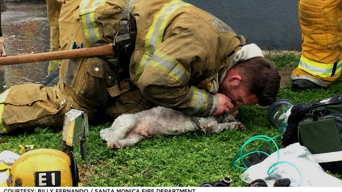 Hero firefighter saves pup with mouth-to-snout