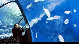 گزارش تصویری از آکواریوم اصفهان واقع در پارک جنگلی ناژوان