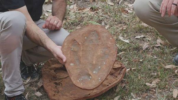 Sensationsfund in Australien: Gewaltige Dinosaurierspuren an der Küste