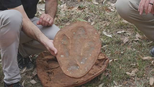 Rekordméretű dinoszauruszlelet Ausztráliában