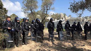 Birokra keltek a rohamrendőrökkel az olajfák védelmében