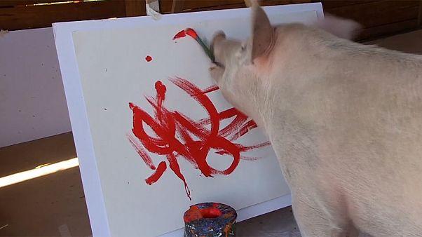 Pigcasso, a porquinha sul-africana expressionista abstrata
