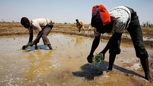 الأمم المتحدة: ملايين الأشخاص سيحرمون من المياه الصالحة للشرب في 2017