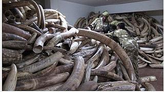 Hope for Africa's elephants as ivory prices drop in China