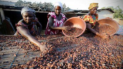 Côte d'ivoire: baisse du prix d'achat du cacao de 36 %