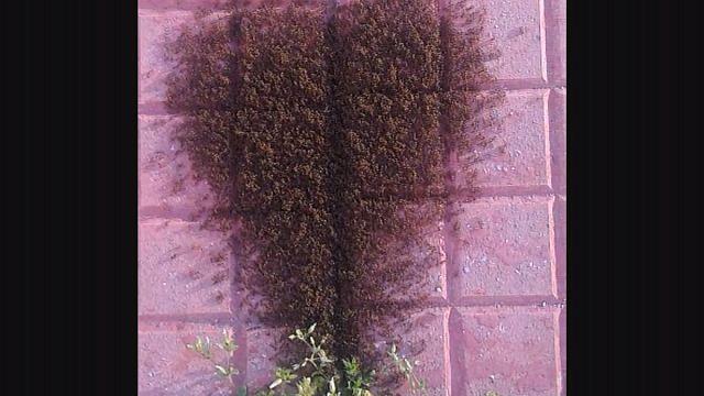 Karıncalar kalp çizerse...