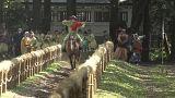 يابوسامرياضة رمي الرماح أثناء ركوب الخيل في اليابان