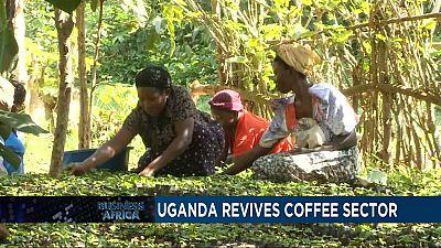 En Ouganda, des pépinières aident des fermiers à relancer le secteur du café et l'Angola se conforme aux directives de l'OPEP