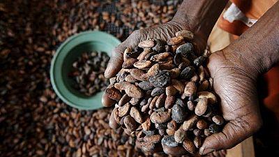 Côte d'ivoire/Cacao : les planteurs annoncent des poursuites contre les dirigeants de la filière