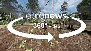 360° video: Food security programmes to reduce displacement in rural areas