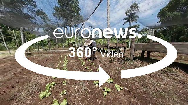 Élelmezésbiztonsági programokkal a vidéki elvándorlás ellen Kolumbiában