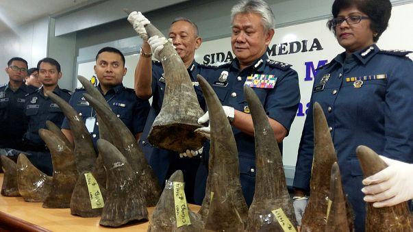 احباط عملية تهريب قرون وحيد القرن في ماليزيا