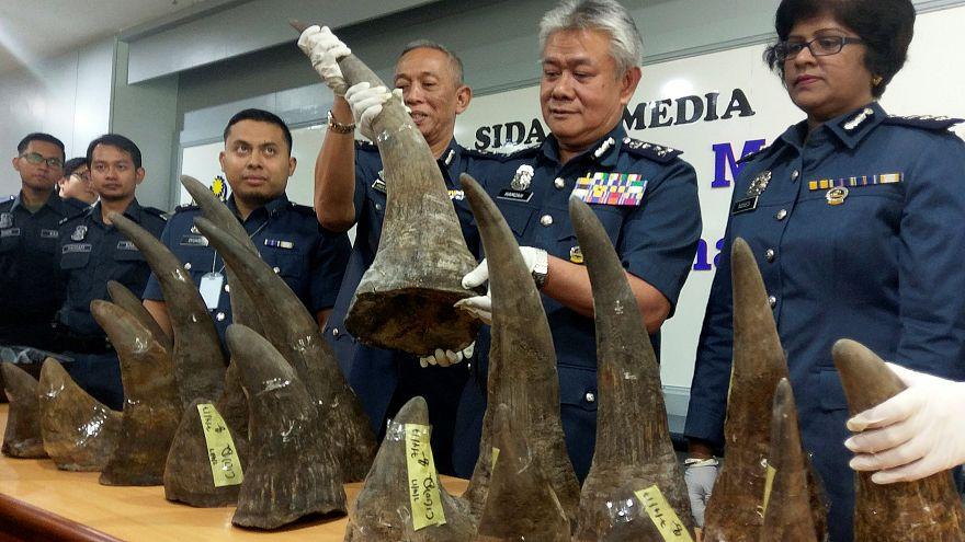 Malasia incauta de 18 cuernos de rinoceronte procedentes de Mozambique