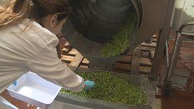 Vasos feitos com ervilhas: Leguminosas e a produção de plástico biológico