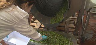 Як перетворити відходи харчової промисловості на ресурси?
