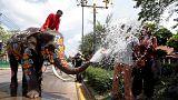 سرمستی فیل ها در آستانه سال نو در تایلند