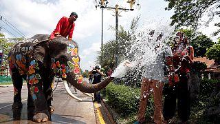 Bagno degli elefanti alla vigilia del Nuovo Anno tailandese