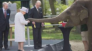 """Elephants """"excited"""" by banana-toting Queen Elizabeth"""