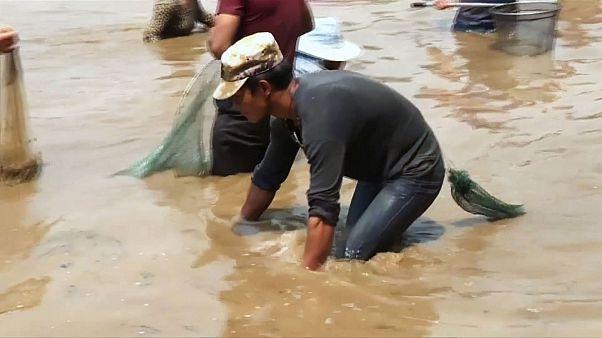 Cina, il festival della pesca