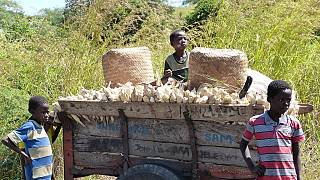 Malawi cracks down on food smugglers seeking more profit