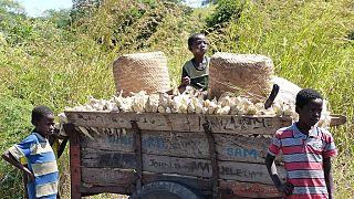Malawi : le gouvernement mobilisé contre la contrebande de maïs