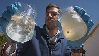 البكتيريا الكهربائية لتنقية المياه العادمة