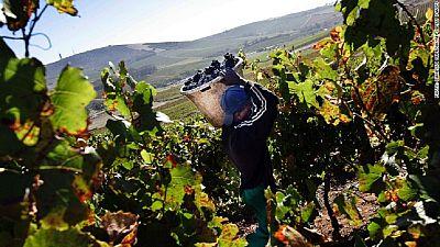 Des prix trop bas menacent la survie des vins sud-africains