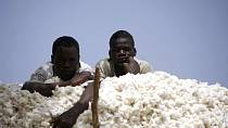 Burkina Faso cotton output to rise in 2017-18 season- Industry official