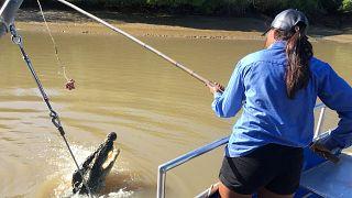 شرعنة صيد التماسيح لجذب السياح في أستراليا