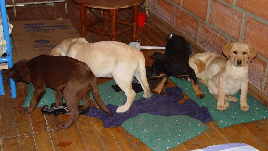 Image: Puppies rescued from a farm in Colombia destined for use as drug mul