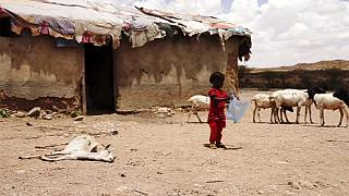 Somaliland droht eine Hungersnot