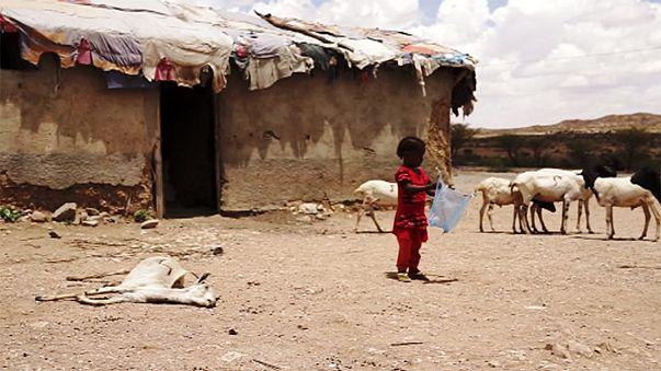 Somaliland droht eine Hungersnot
