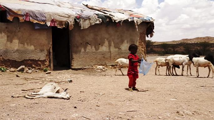 Somaliland on the brink of famine, warn NGOs