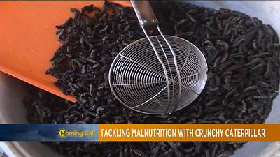 Tackling malnutrition with crunchy caterpillars [The Morning Call]