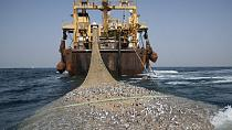 Pêche illégale : 11 navires saisis en Afrique de l'Ouest lors de contrôles (Greenpeace)