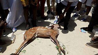 Le Ghana célèbre le festival Aboakyir (chasse aux cerfs) à Winneba