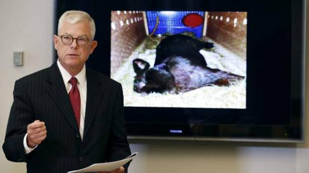 United Airlines: Owners of giant dead rabbit suspect foul play