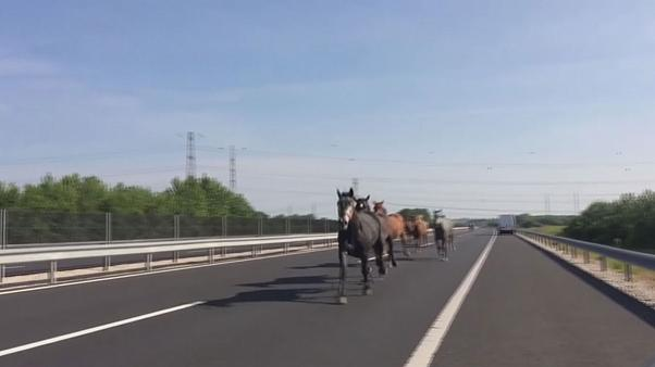 Horses on the highway