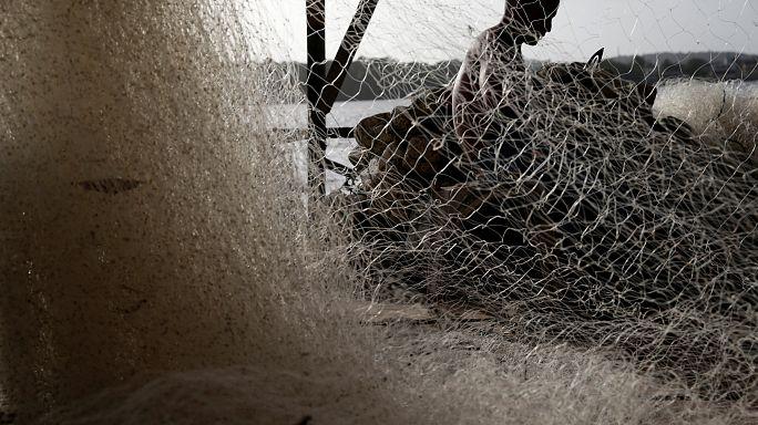 الدلفين الأسود عدو جديد للصيادين المغاربة في الحسيمة