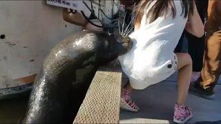 أسد البحر يختطف طفلة ويهرب بها تحت الماء