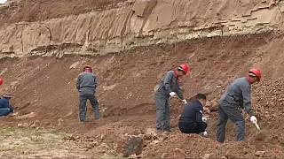 Chinese scientists start excavating large-scale dinosaur fossils