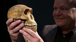 Afrique du Sud : grande exposition de fossiles humains