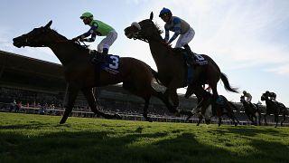 Image: Horses race at the Breeders' Cup World Championships at Santa Anita