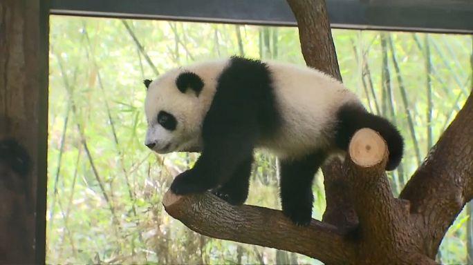 عرض توائم نادرة لحيوانات في الصين