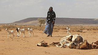 Likelihood of El Nino has decreased this year - S. Africa weather service