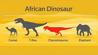 Découverte des restes d'un dinosaure au Maroc