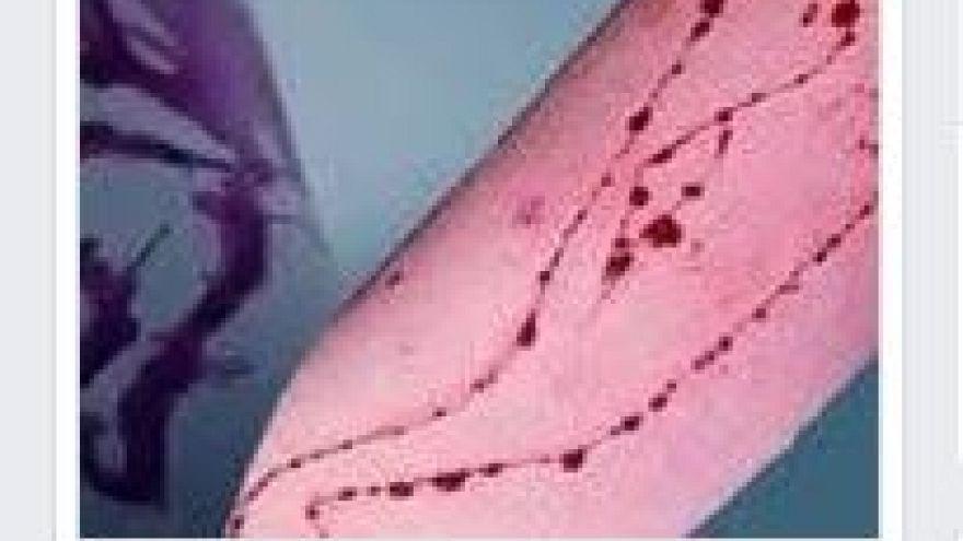 Italia: a Milano e Palermo si indaga sul Blue Whale Challenge